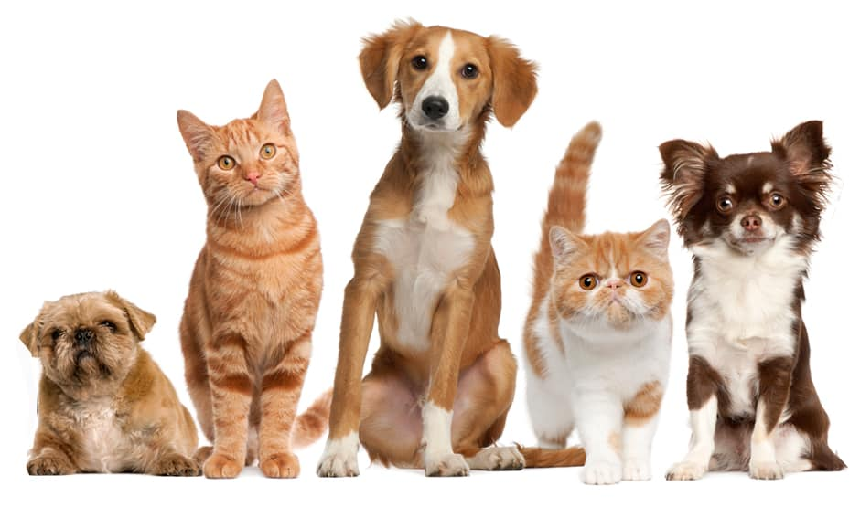 We Remove Foul Indoor Cat Or Dog Urine Odor - (805) 910-7066 Gorilla